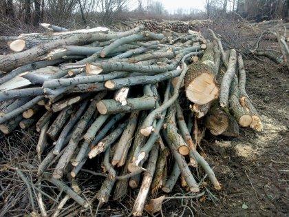 Recuperiamo il tuo legno vergine per trasformarlo in biocombustibile o in energia a basso costo
