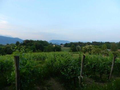 """L'agriturismo """"I Benandanti"""" è una idea di relax tra colline, vigne e boschi in una delle più belle zone del Friuli Venezia Giulia."""