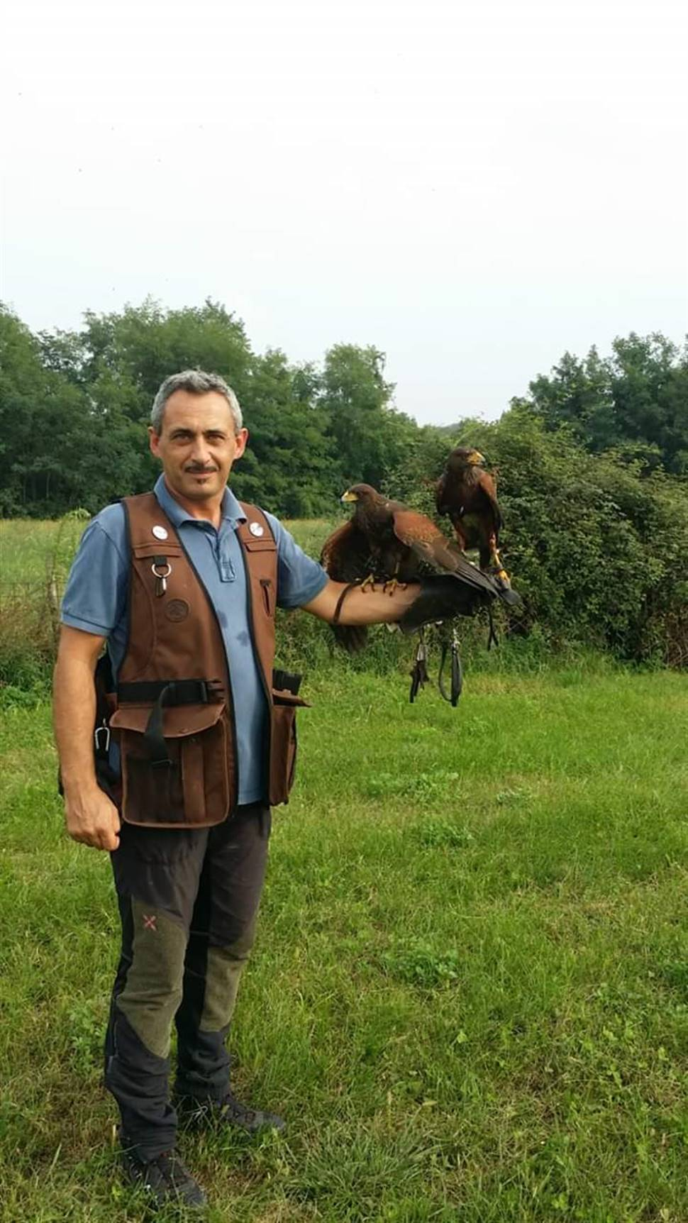 Artiglio Bird Control - Cremona