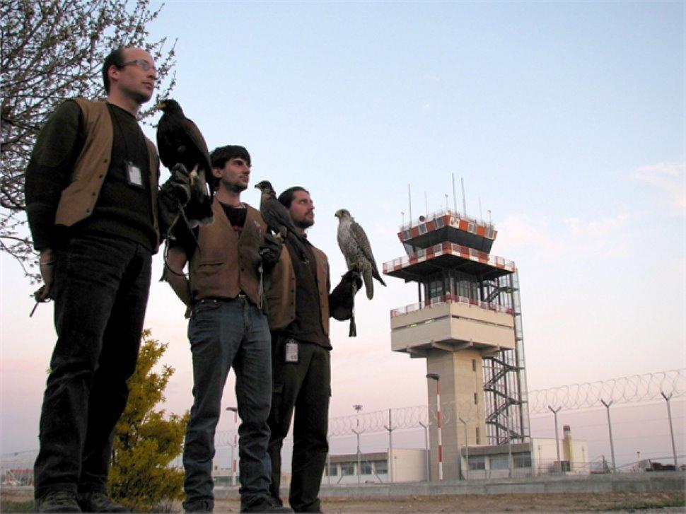 BIRD CONTROL Falconeria professionale - Udine