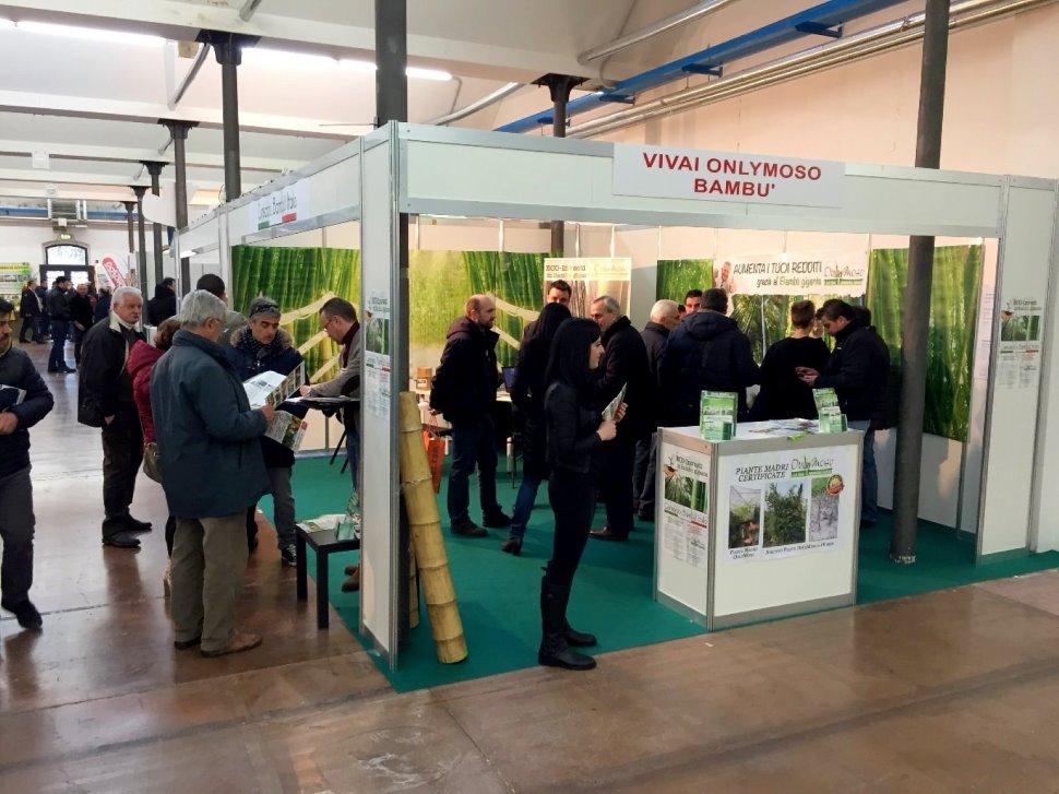 Coltivazione Bambù Gigante - Udine