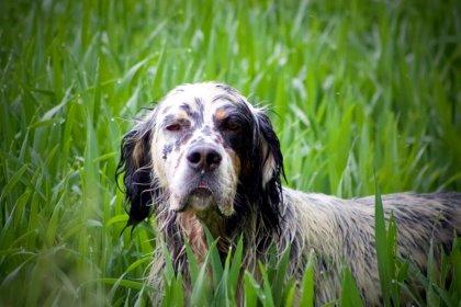 Cani caccia e tanto altro...