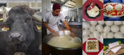 Alleviamo gli animali che ci danno il latte per essere sicuri di offrirti formaggi freschi e yogurt di altissima qualità. Vieni a conoscerci