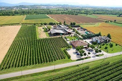 I 3 settori della nostra AZIENDA AGRICOLA: Allevamento, Coltivazioni, Viticoltura