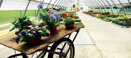 Il vivaio La Sughera ha aperto ed è pronto a crescere insieme a te e alle tue piante: ornamentali, da orto, aromatiche